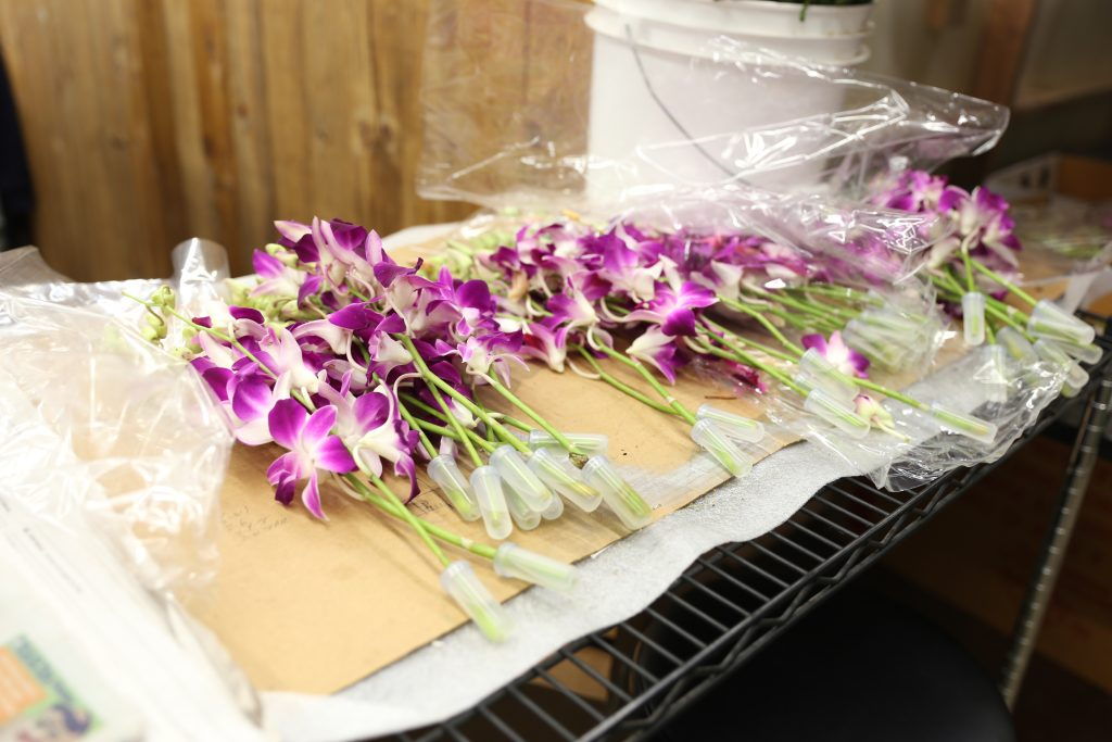 wholesale orchids at the Los Angeles Flower Market